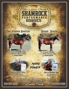Shamrock Performance Horses